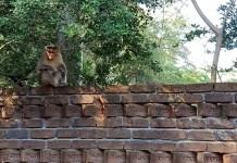 J'ai vu le singe le chacal et la mangouste - Crédit photo izart.fr