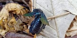 Comment j'ai sauvé une abeille - Crédit photo izart.fr