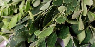 Recette N°216 - Pesto indien au moringa - Crédit photo izart.fr