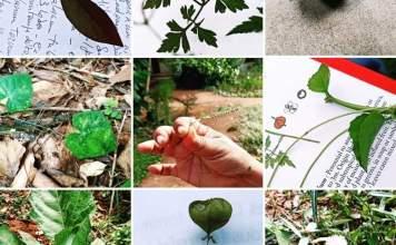 Les feuilles cuites et les fruits rouges - Crédit photo izart.fr