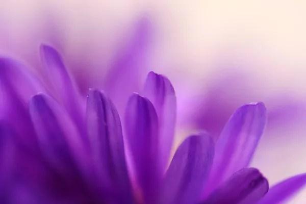 Tableau Dco Fleur Violette Izoa