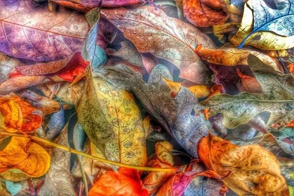 Tableau photo Tissu feuilles  Izoa