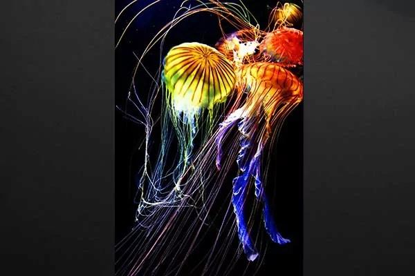 Tableau Deco Murale Medusa  Izoa