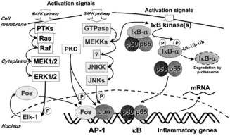 The role of keratinocytes in the pathogenesis of atopic