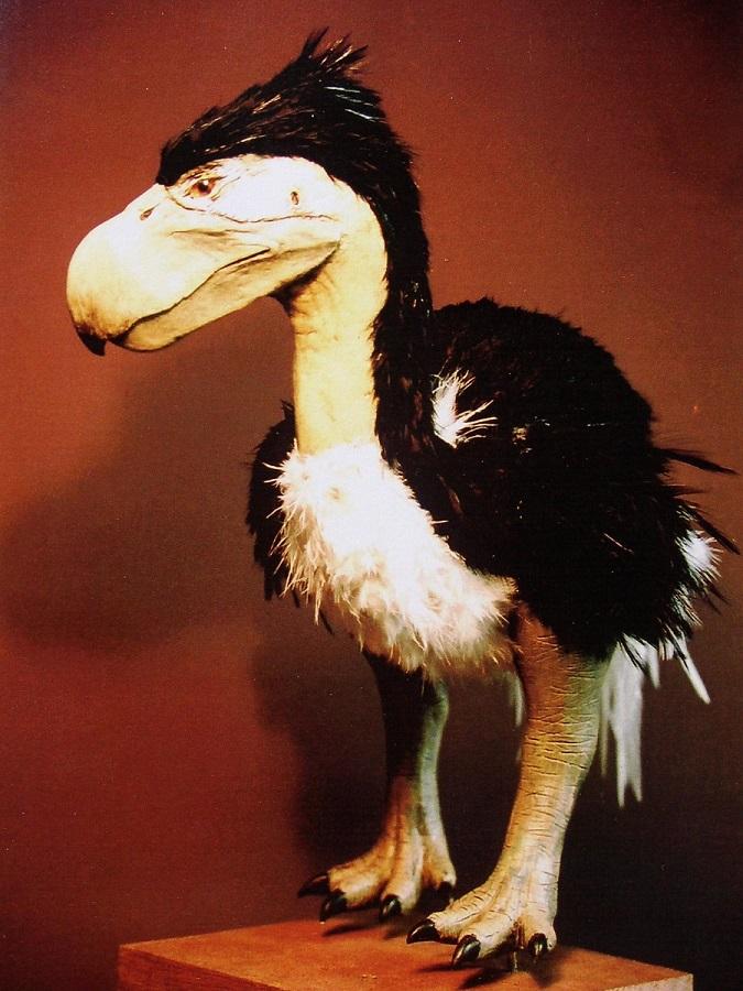 Kunstwerk dat wetenschappelijk en anatomisch verantwoord is .n Het beeld van een reconstructie van de Diatryma vogel uit de prehistorie