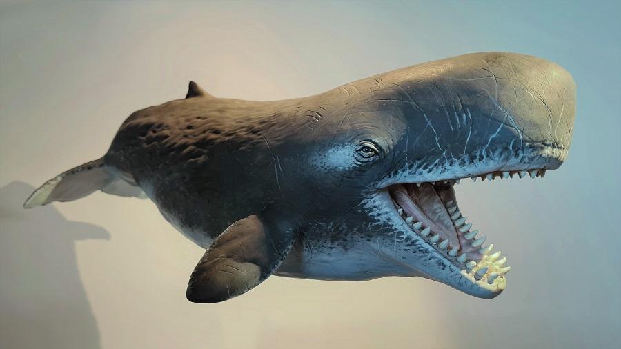 Standbeeld Livyatan melvillei potvis uit de oertijd staat in Historyland. Gebruikt in een animatiefilm gemaakt door reclame en film maatschappij Twisted
