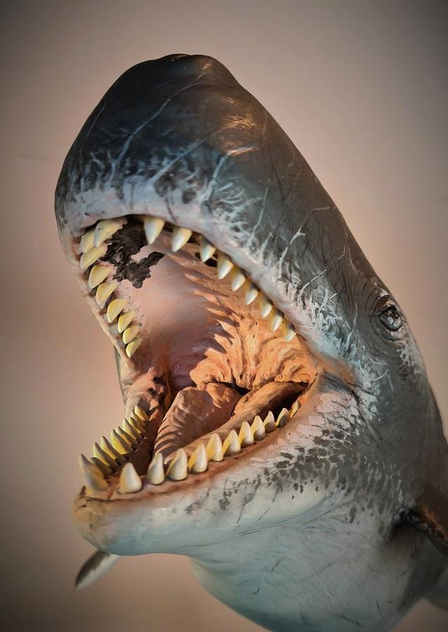kunst object Livyatan melvillei prehistorisch zeezoogdier. Dit beeldhouwwerk staat in Historyland