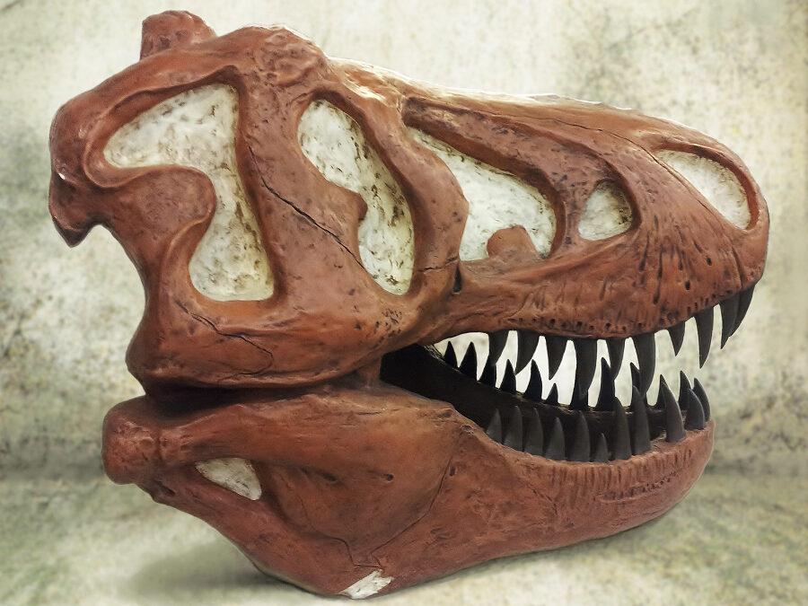 Sculpture van de Skelet van de T-REX, tyrannosaurus rex ,dinosaurier. Dit model is gemaakt van polyester met echt houtsnijwerk tanden, levensgroot en realistisch nagemaakt