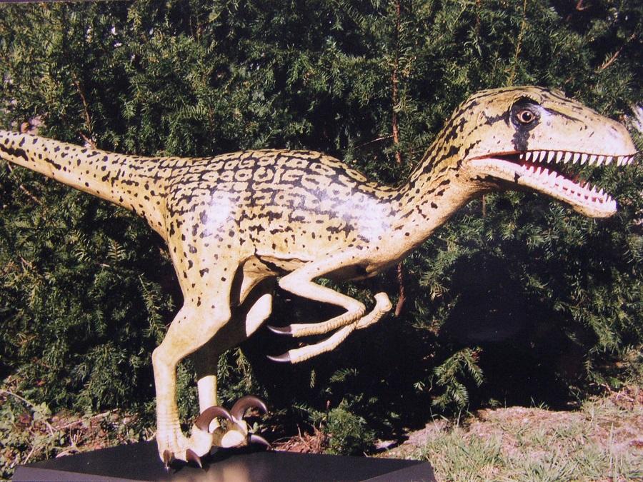 Dinosaurus polyester 3D object , Utah raptor model in opdracht van geologische museum van Nederland de groene Poort