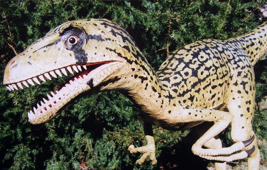 Model van de utahraptor een dinosaurus uit het krijt. In opdracht door sculptor Jaap Roos gemaakt voor prehistorisch museum de Groene Poort