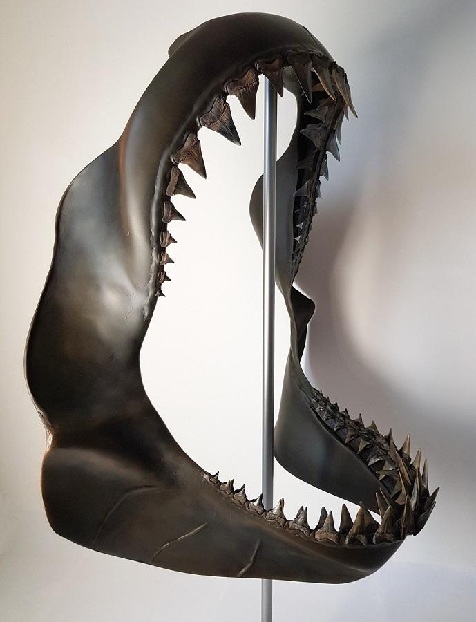 Haaienkaak museumstuk die paleontologisch verantwoord is. Uniek exemplaar gereconstrueerd door Jaap Roos en tentoongesteld in museum Historyland