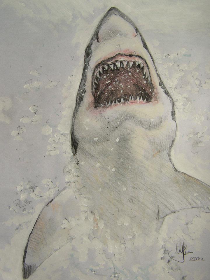 Tekening van de witte haai springend uit het water. Gemaakt door tekenaar Jaap Roos