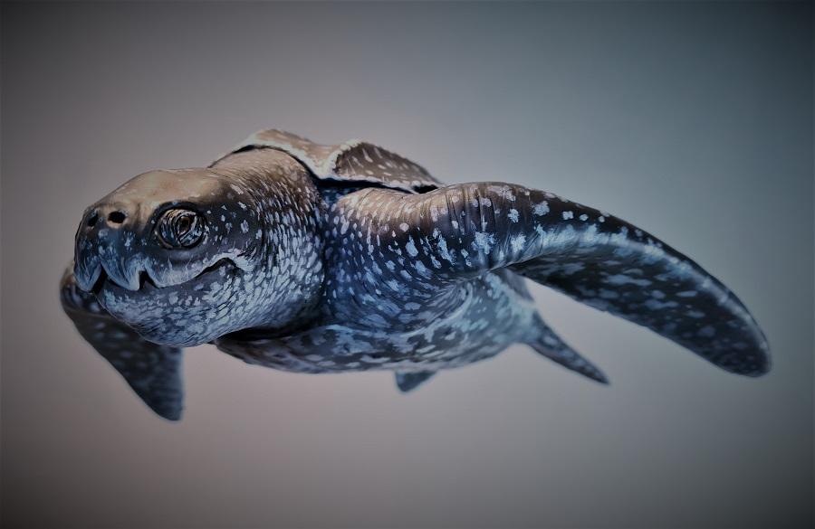 Model schildpad levensecht realistisch diermodel gemaakt door animalier Jaap Roos