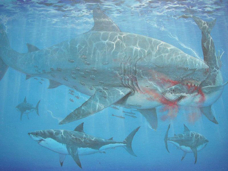 Oceaan tekening met de uitgestorven haai de megalodon en de witte haai. Geschilderd door animalier Jaap Roos