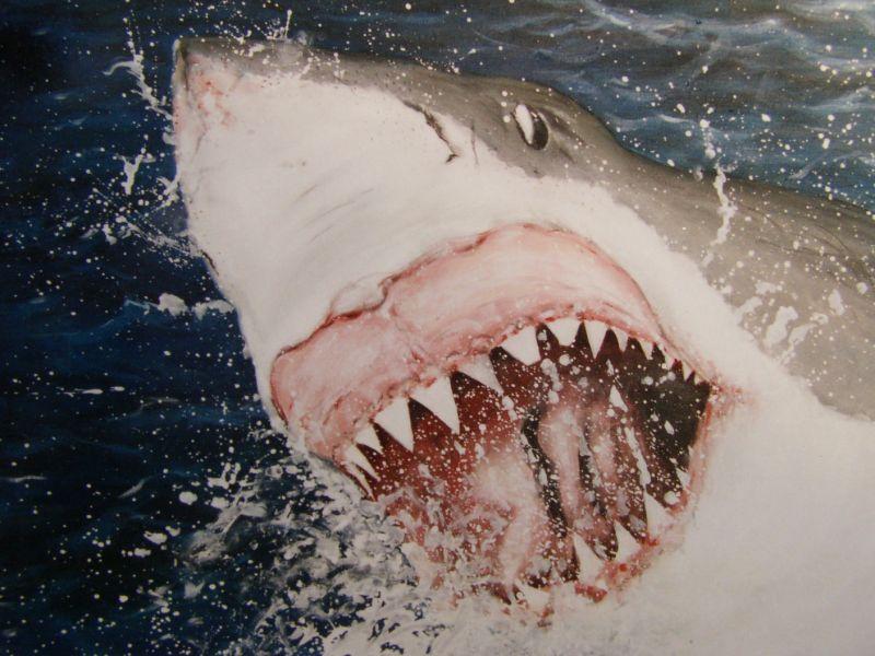 Kunstig geschilderd doek met de great white. Airjaws, de witte haai valt vanuit de diepte en springt uit het water met veel opspattend water.