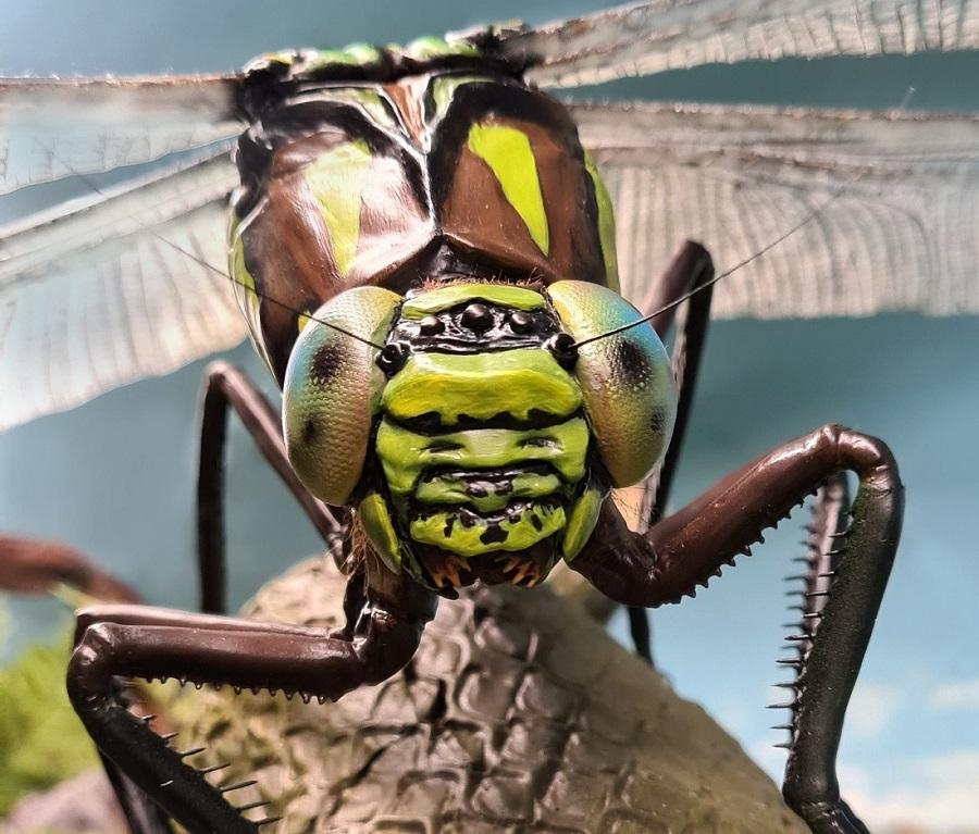 Sculptuur van de prehistorische libelle the Meganeura. Dit 3D model is paleontologisch verantwoord en te zien bij museum Historylamd