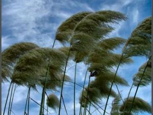 angin