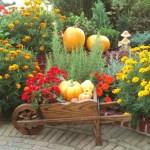 Jabón del jardinero – receta
