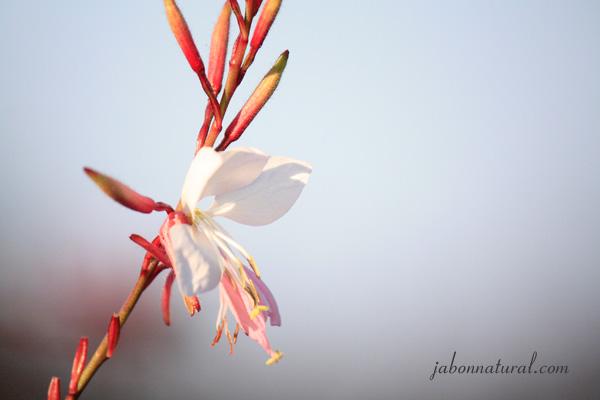 Principios activos de las plantas II - jabonnatural.com