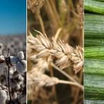 Nuevos extractos vegetales