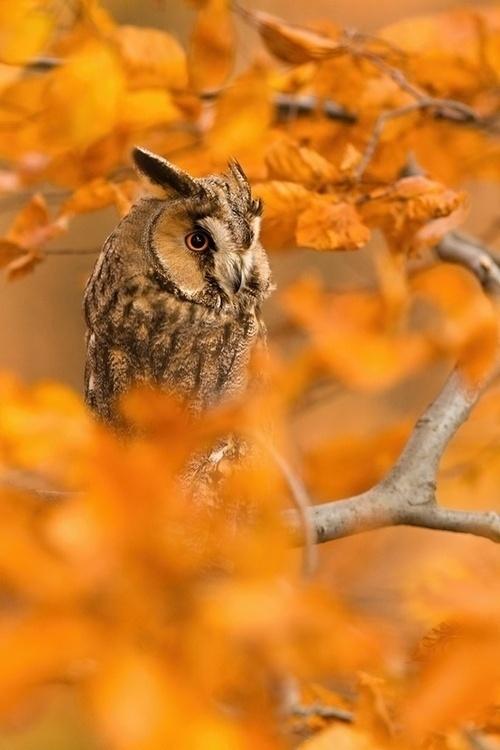 Buho en un bosque de otoño