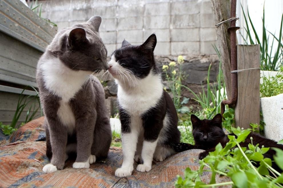 Fukoka-cielo-gatos3