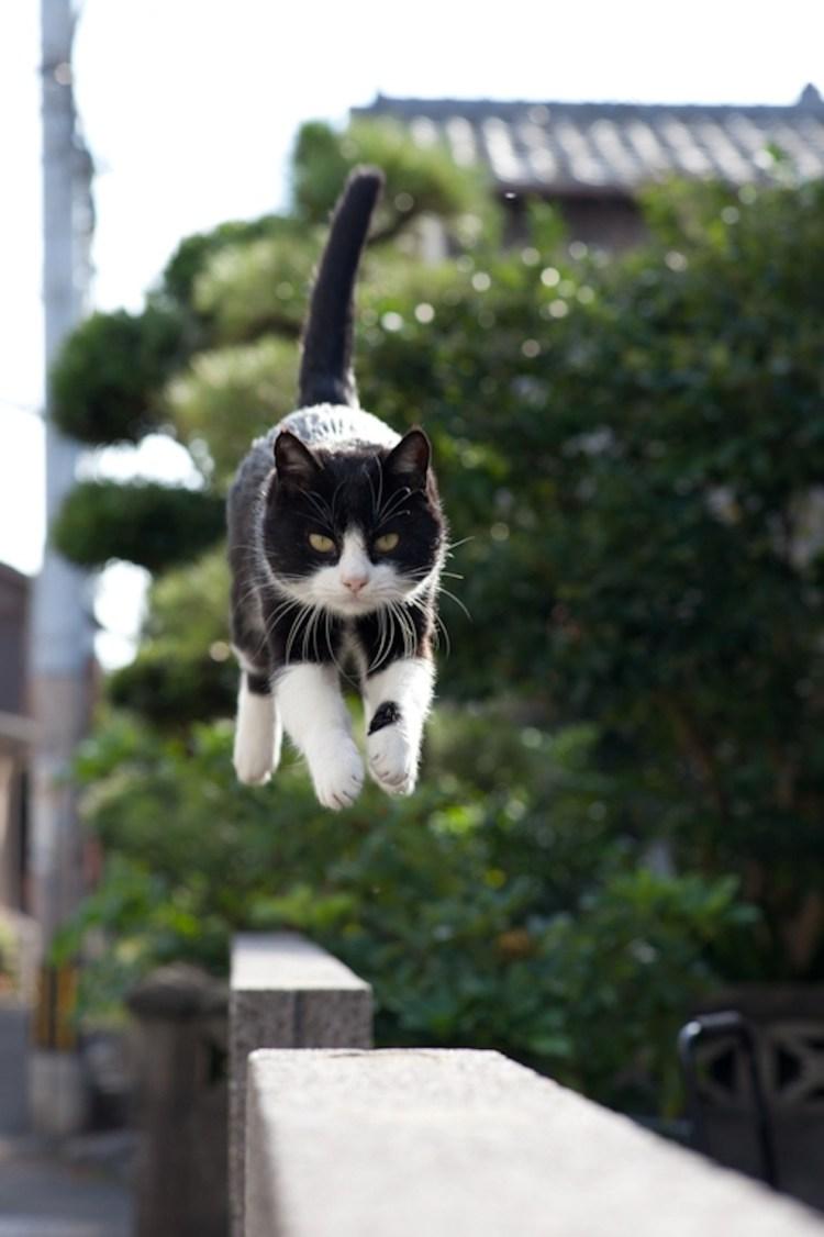 Fukoka-cielo-gatos2