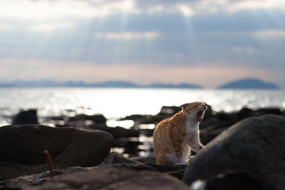 El cielo de los gatos - Tashirojima