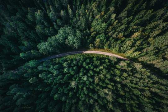 30,000 trees planted on behalf of Jabra APAC partners