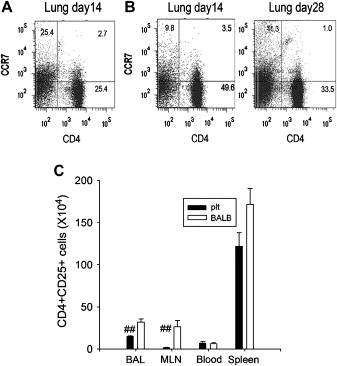 Role of CCL21 and CCL19 in allergic inflammation in the