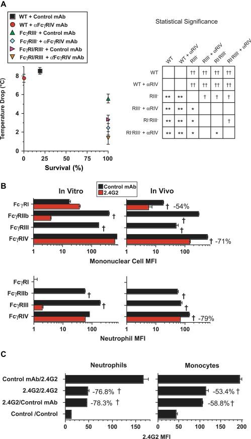 Rapid desensitization of mice with anti-FcγRIIb/FcγRIII