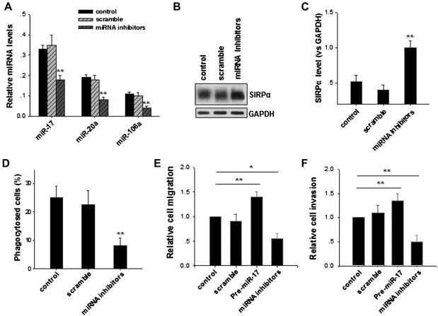 MicroRNA-17/20a/106a modulate macrophage inflammatory