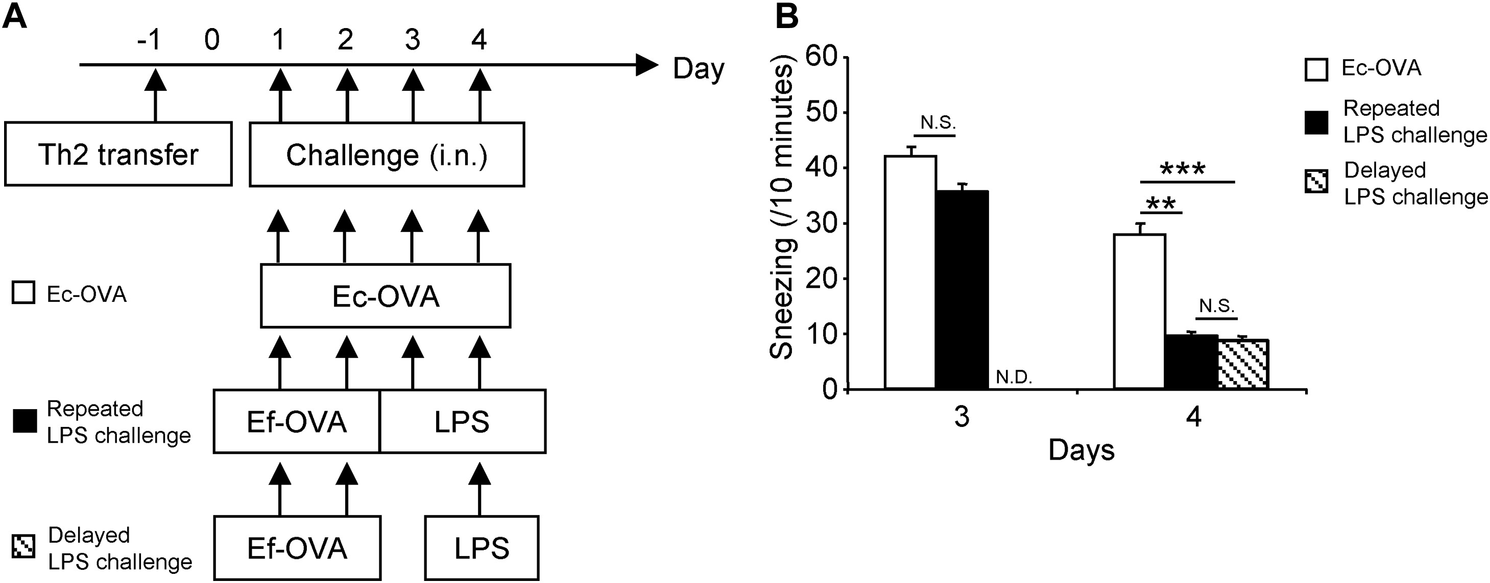 Allergen Endotoxins Induce T Cell Dependent And Non Ige Mediated Nasal Hypersensitivity In Mice