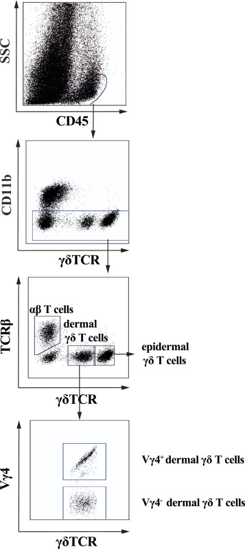 Inhibition of IL-17–committed T cells in a murine