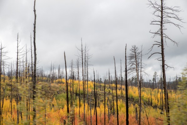 Is this forest fire still going?