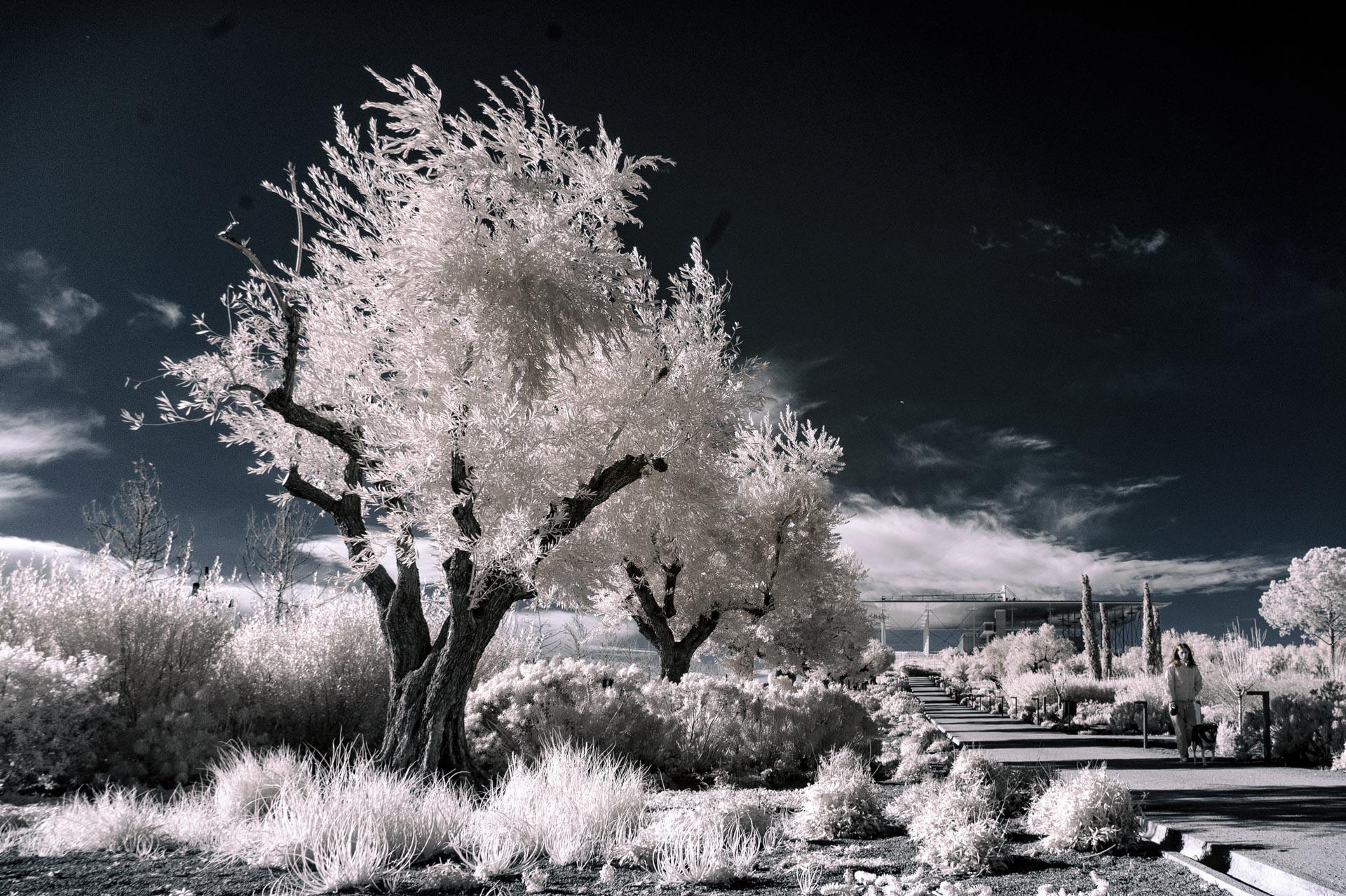 Winter Infrared