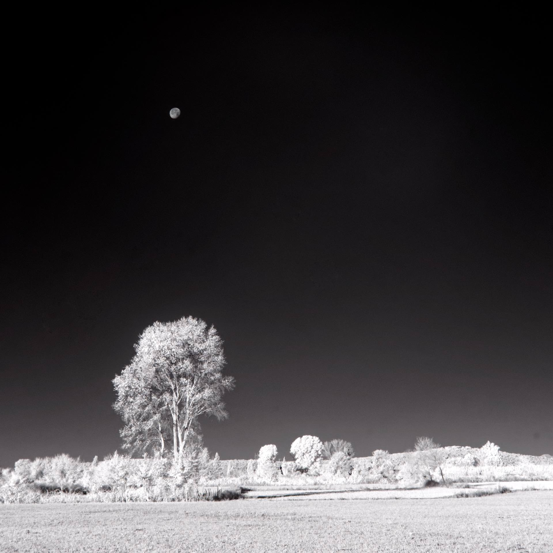 Infrared Landscape with Moon
