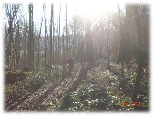 bushcraft, course, skills, courses