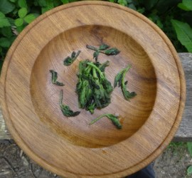 chargrilled hogweed | foraging | Kent | London | south east