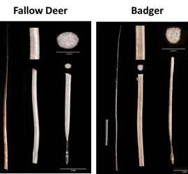 Fallow deer and badger hair