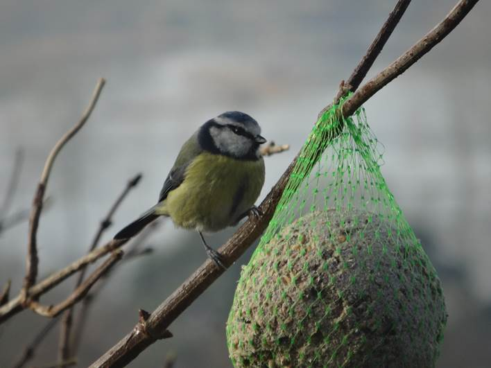 Birds in our ancient woodland camp