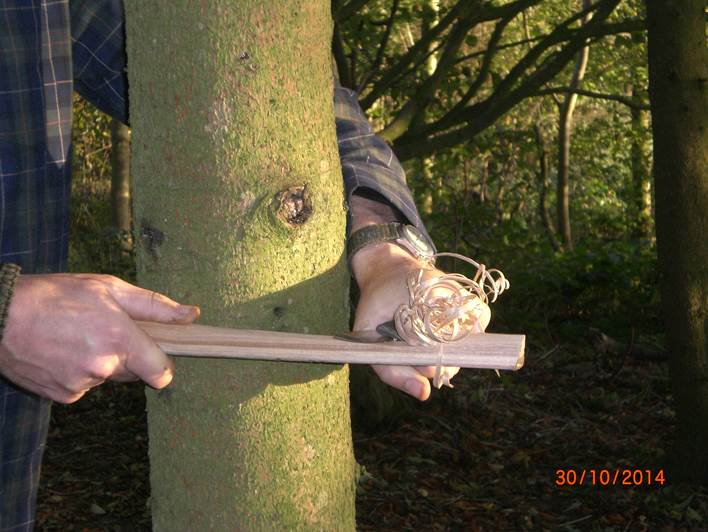 Using a tree to make a feather stick