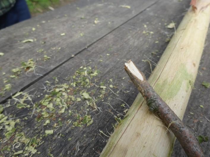 sweet chestnut cordage