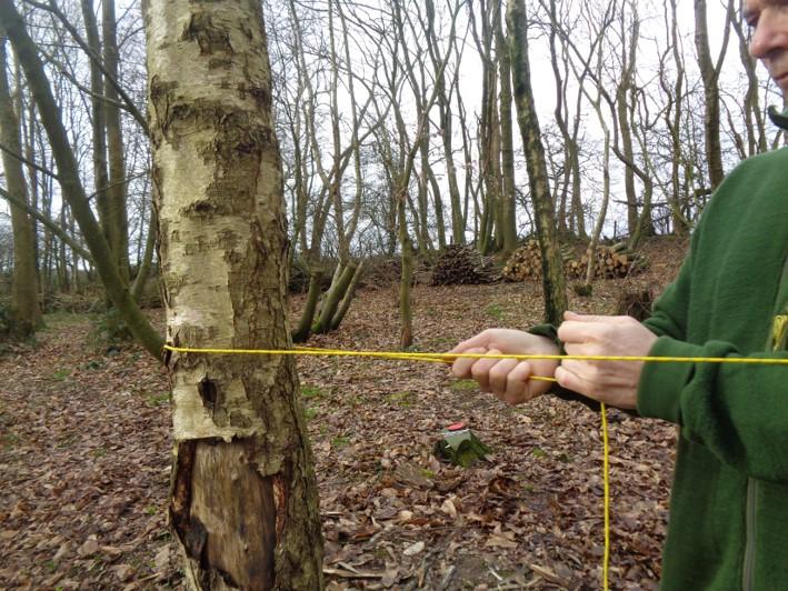 taut line hitch   tarps   hammocks   bushcrfat   Kent   London   south east