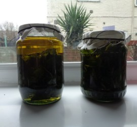 comfrey oil | herbal remedies | bushcraft | Kent | south east | London