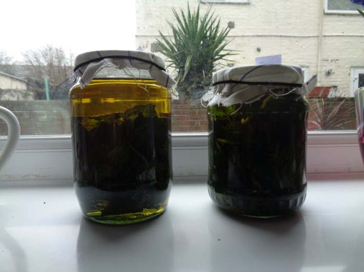 comfrey oil | herbal remedies | bushcraft | Kent | south east | London