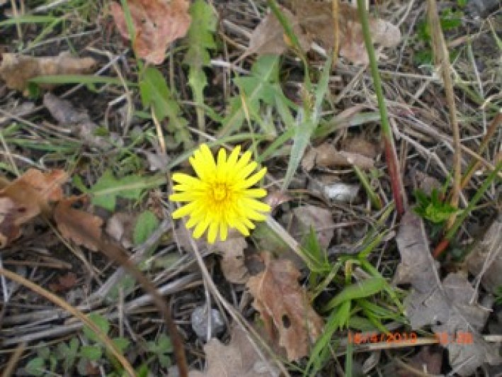 another 5 easily identifiable plants to forage | bushcraft | Kent
