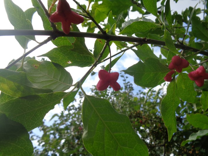 bushcraft | foraging | fruits & berries | Kent | south east