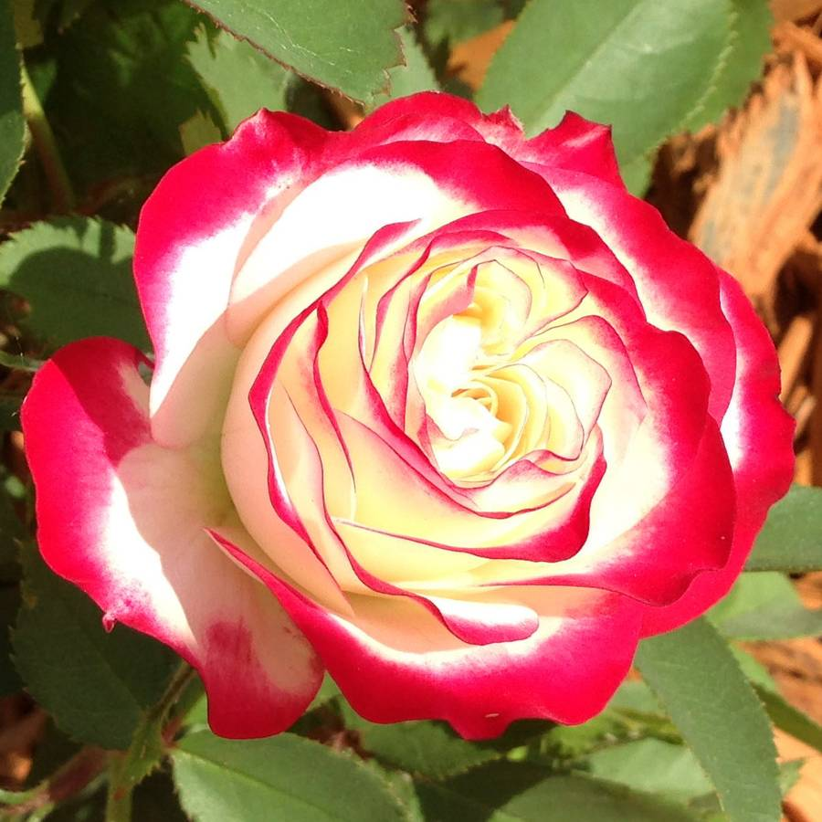 V J Home And Garden