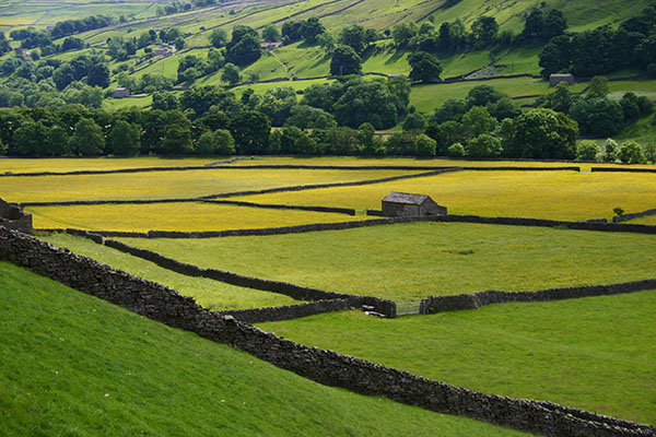 Swaledale meadows and barns
